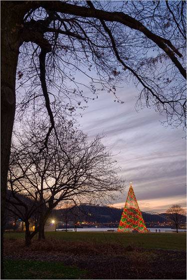 The-Tree-With-The-Luminous-Leaves.jpg