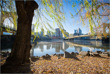 The-Willow-On-The-Allegheny.jpg