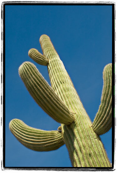The-Standard-Cactus.jpg